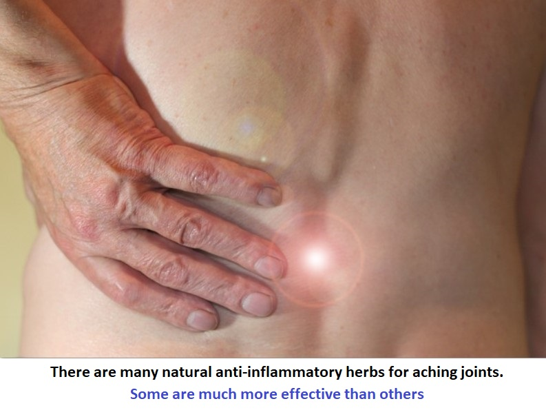 list-natural-anti-inflammatory-herbs-aching-joints